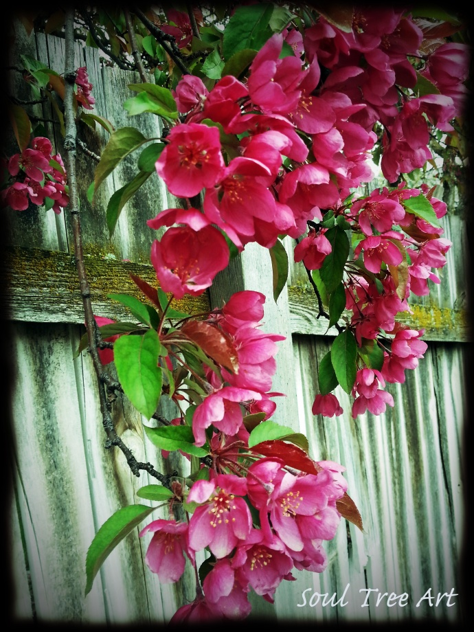 Spring Flowers Over Wood