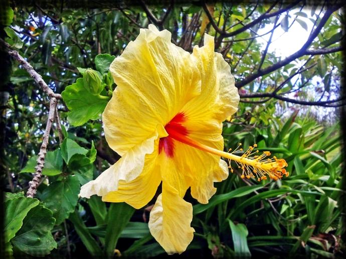 My Hawaiian Flower